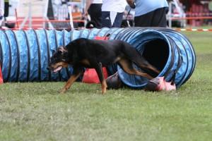 yarka-agility